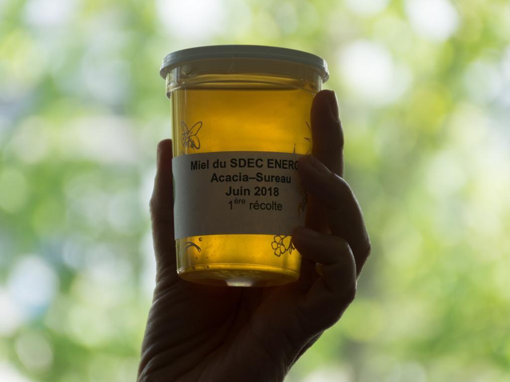 (BIODIVERSITE] Première récolte de miel sur les toits du syndicat