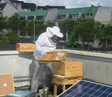 Opération Abeill'Aire : 2 ruches 30000 abeilles sur le toit du bâtiment du SDEC ENERGIE